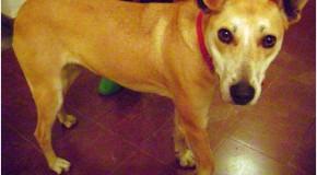 Aplican seis meses de prisión en suspenso por crueldad contra un animal