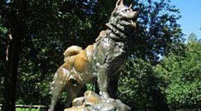 Día Nacional del Perro: ¿por qué?